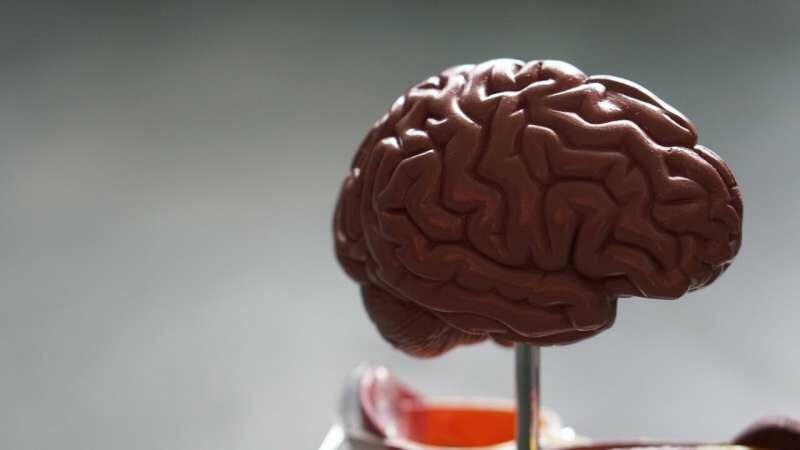 Powerful technique details brain tumors' formidable resiliency